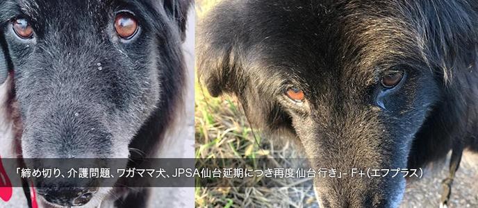 「締め切り、介護問題、ワガママ犬、JPSA仙台延期につき再度仙台行き」- F+(エフプラス